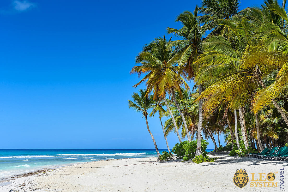 Image of a beautiful beach with palm trees