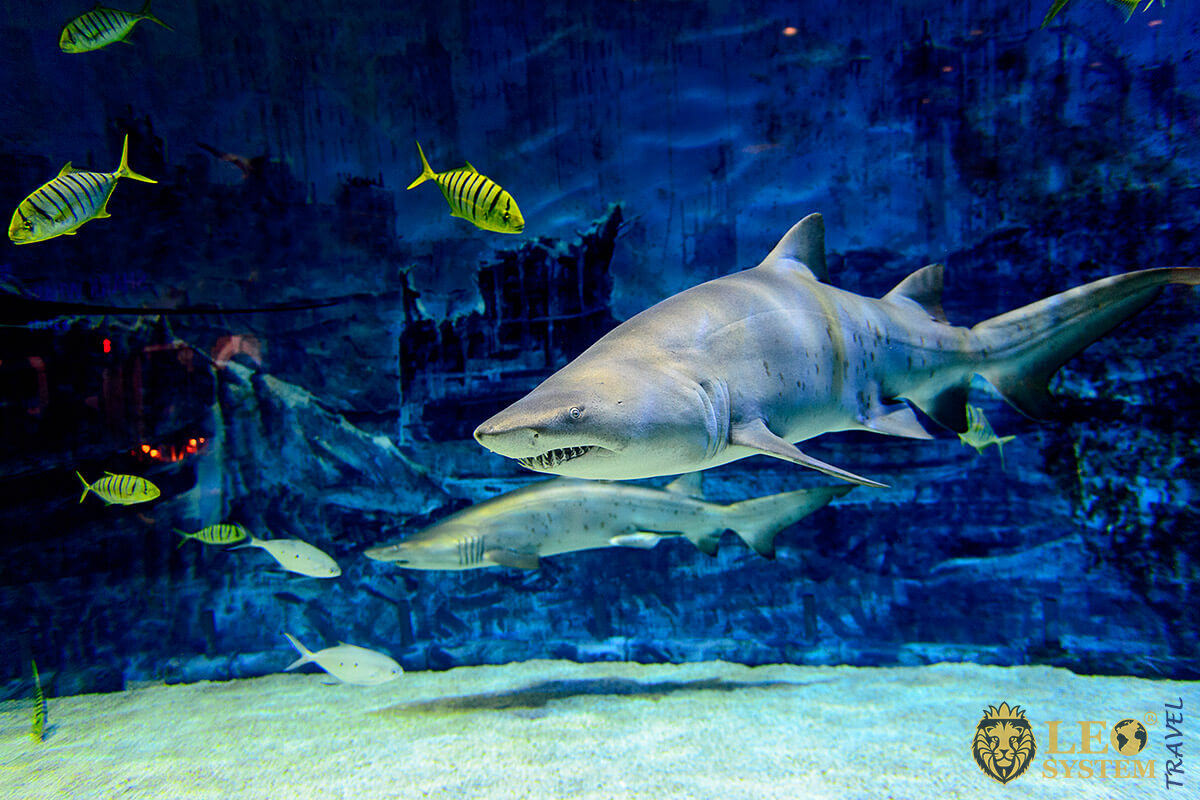 Shark in an aquarium with fish