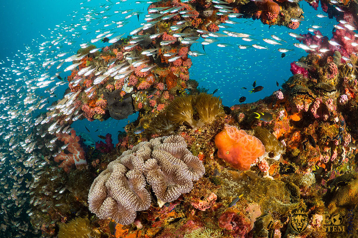 Beautiful coral reefs in Australia