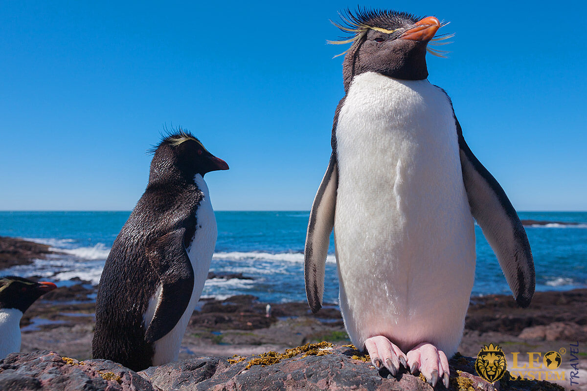Penguins live near the southern part of the country