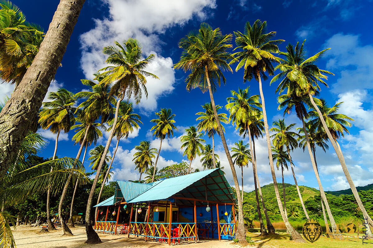 Beautiful view of the hut and palm trees in Colombia