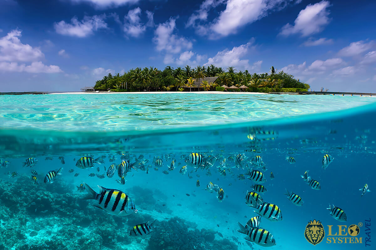 Underwater view of fish and corals - Maldives
