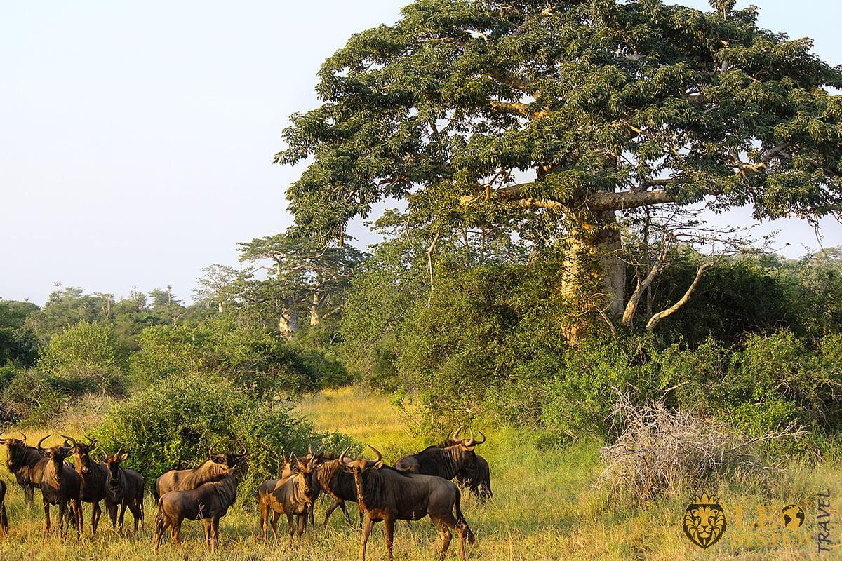 Quiçama National Park - Luanda, Angola