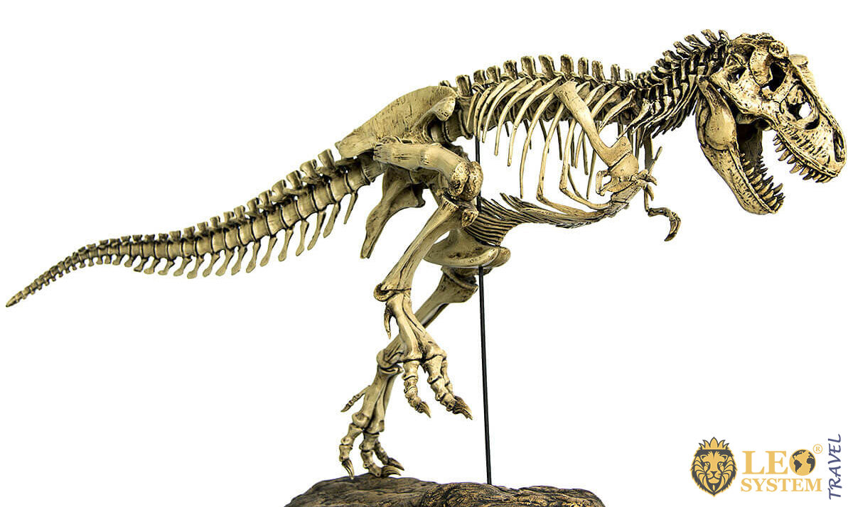 Image of the famous Tyrannosaurus Rex dinosaur - Museum in Sao Paulo