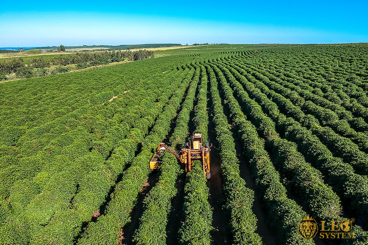 Large coffee plantation in Brazil