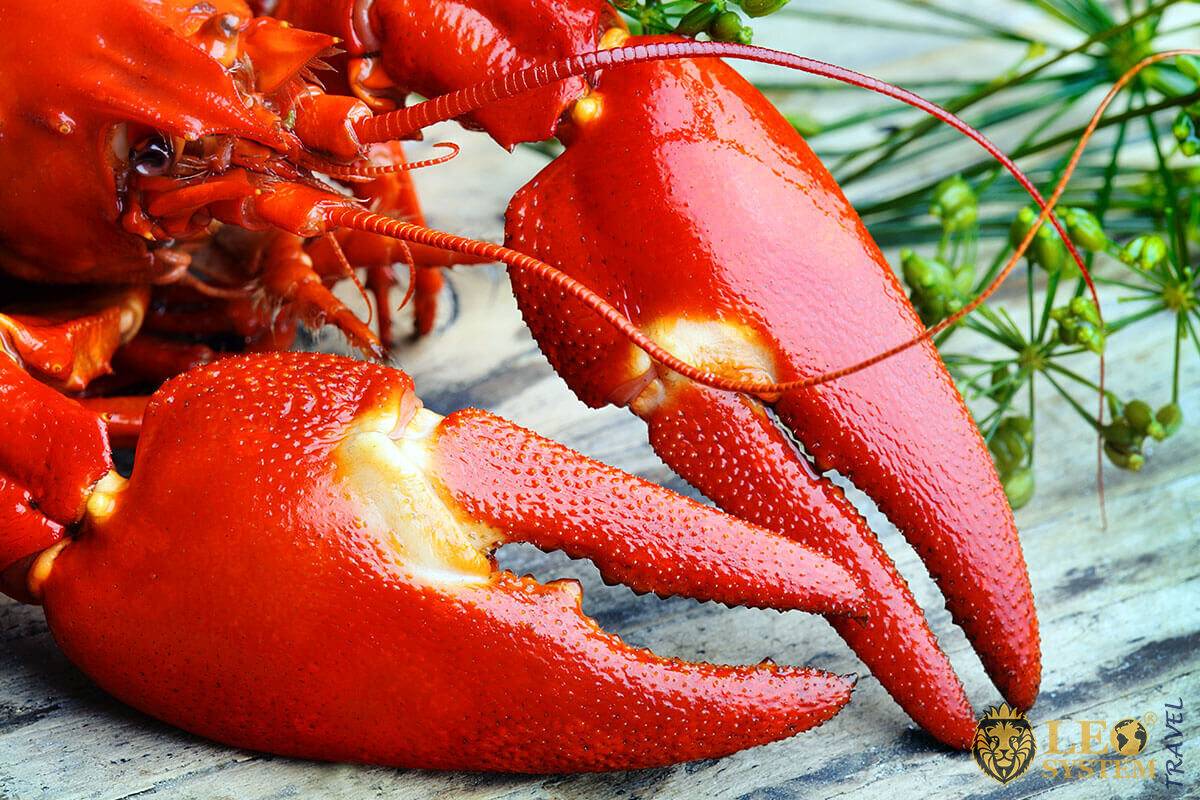 Image of a big red crayfish