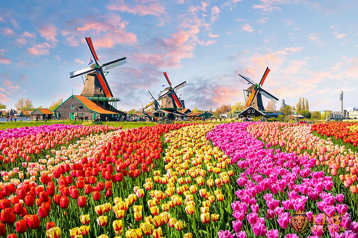 Image of a European field with mills and flowers