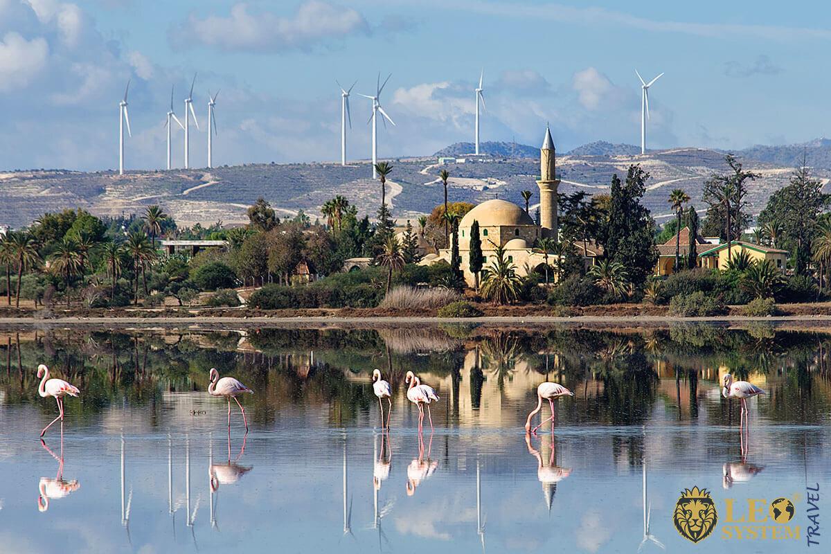 Image of the Salt Lake, Larnaca, Cyprus