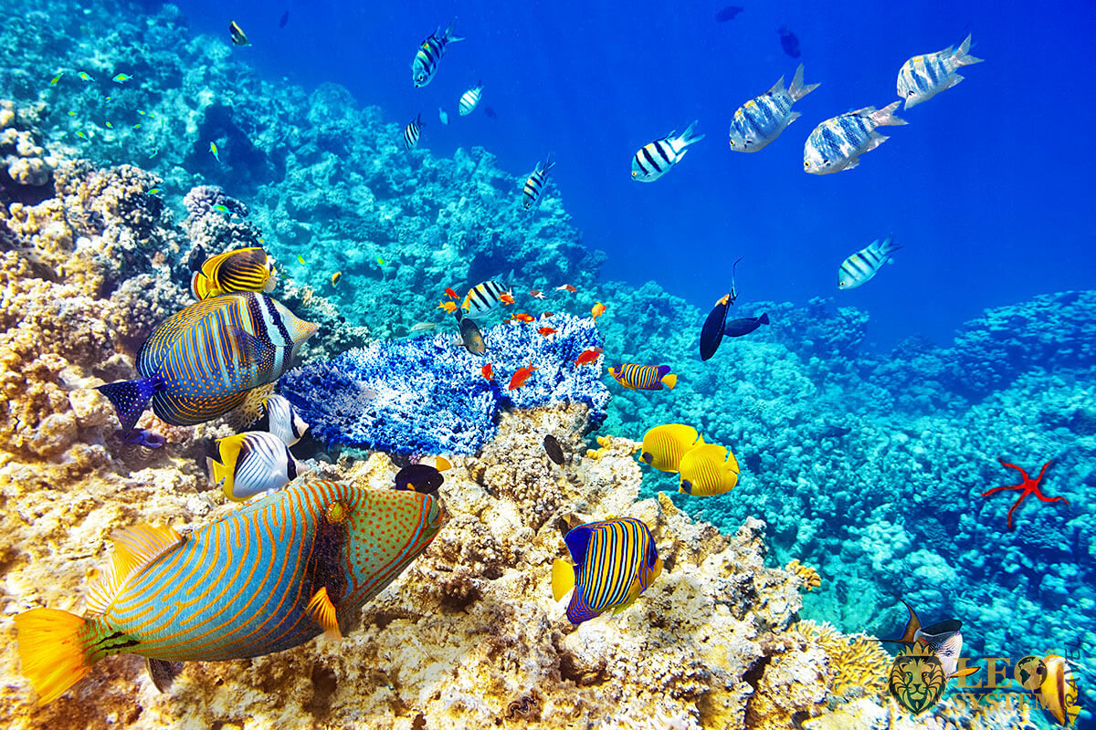 Image of the underwater world, Dominican Republic