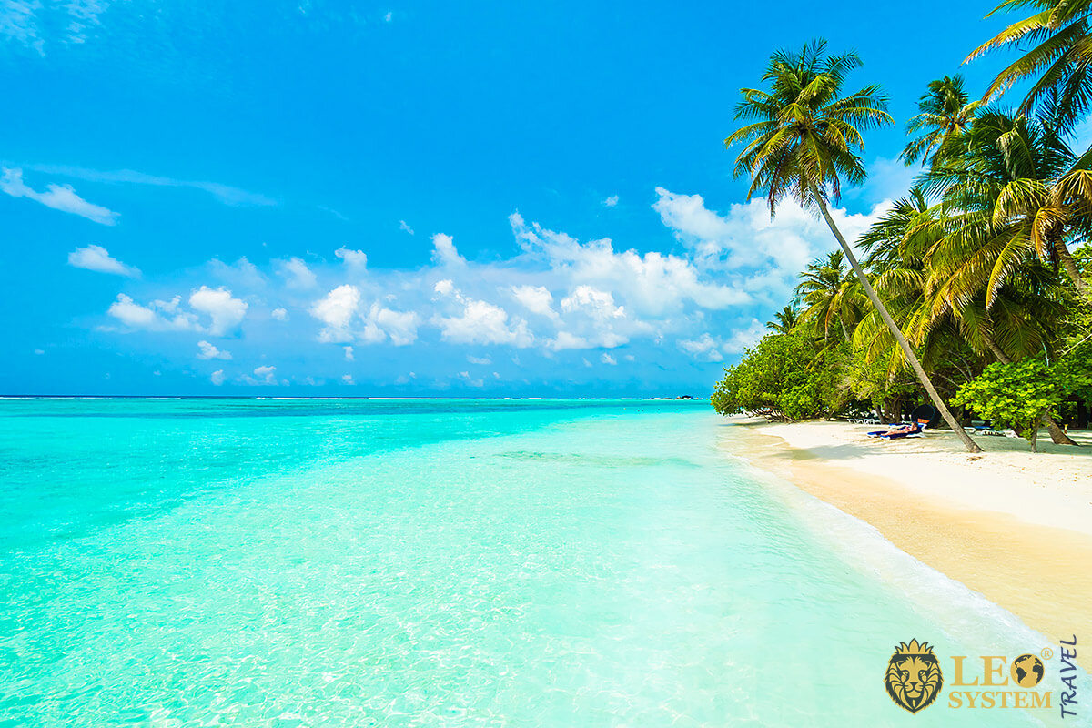 Image of a magnificent beach and palm trees on the island of Male