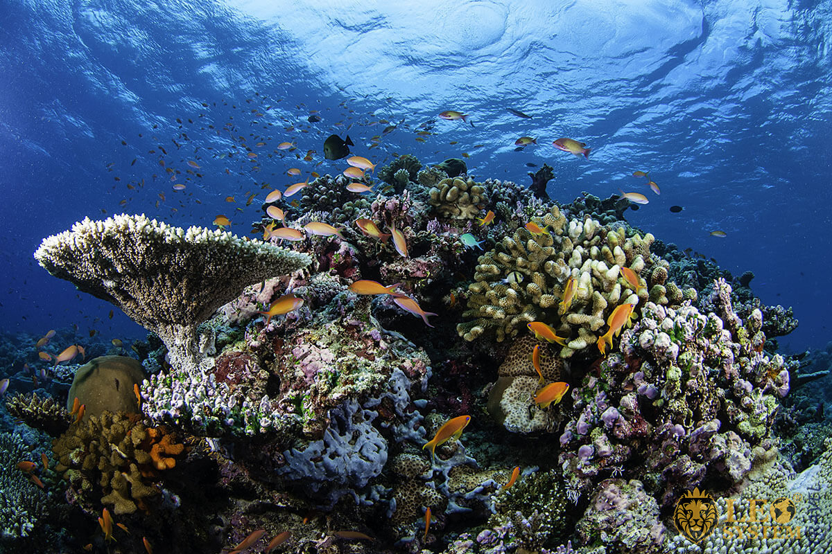 Image of colorful corals and various fish underwater, Maldives