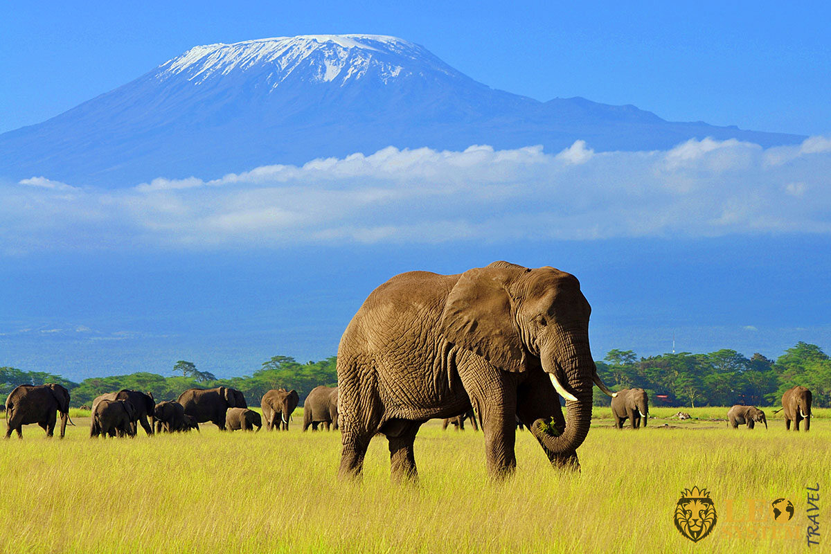 Stunning views of Mount Kilimanjaro and the Animal Park, Africa