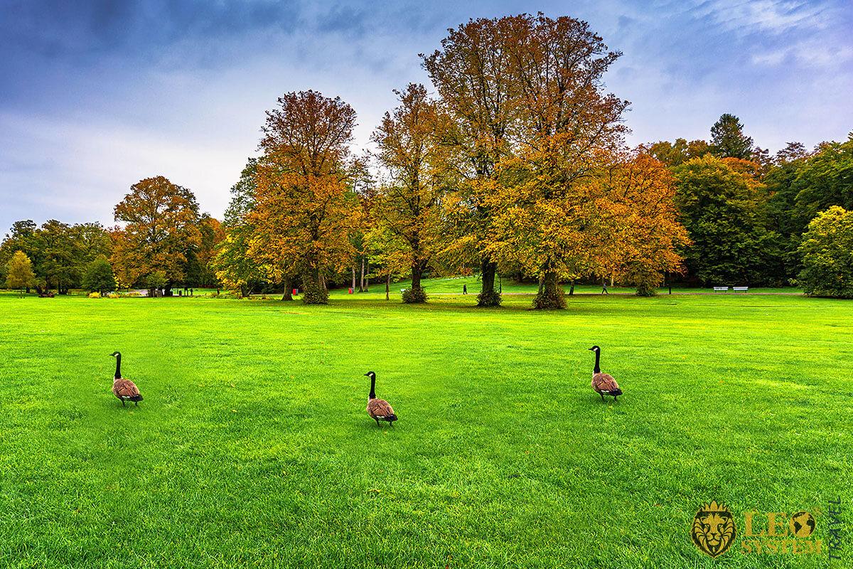 Image of the magnificent Slottsskogen Park, Gothenburg, Sweden