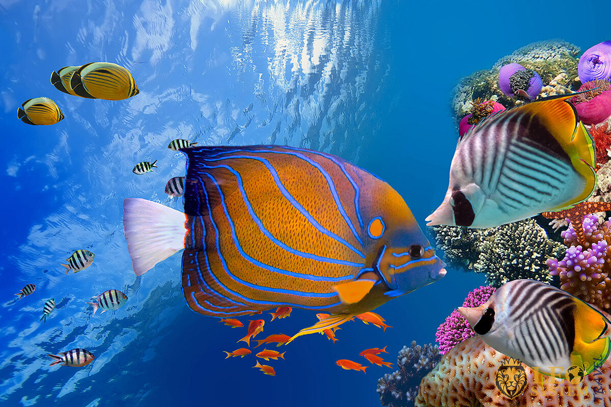 Beautiful underwater world with corals and fish, Hurghada, Egypt
