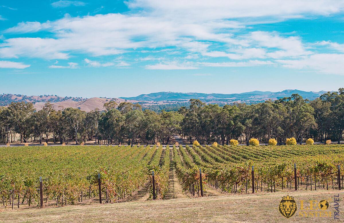 Image of mountains and fields of vineyards, Bendigo, Australia