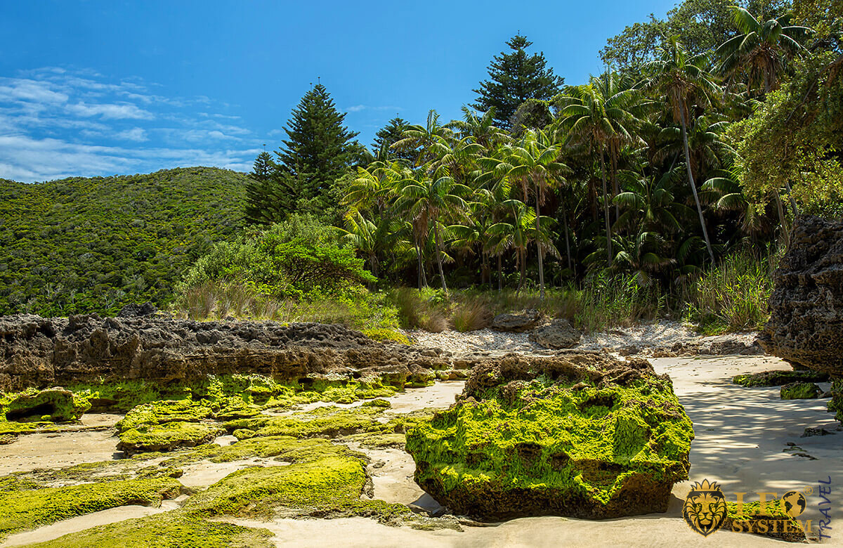 Beautiful view of the palm trees and the beach at low tide, Lord Howe Island