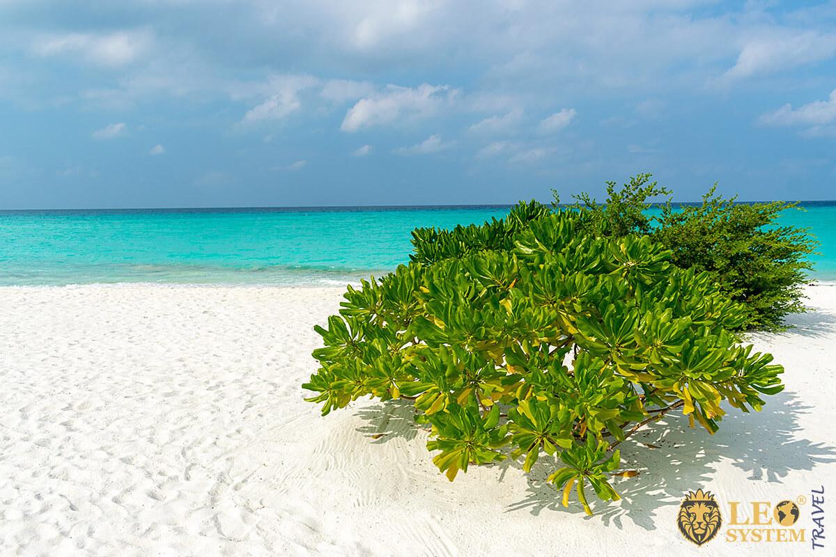 View of the beach and green plants, island of Kuramathi, Maldives