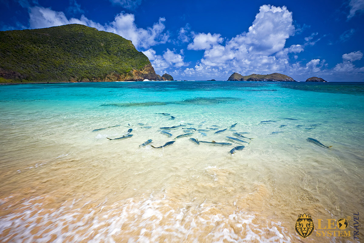 View of the mountain and the ocean with splashing fish, Island of Lord Howe