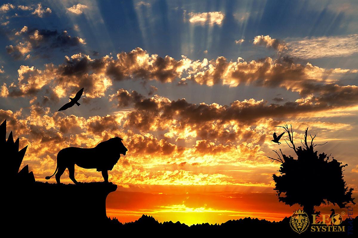 The World of Predatory Animals in Africa
